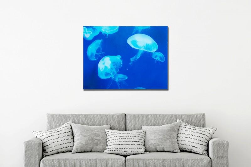Obrázek medúzy 60x80cm sklenice medúzy / 37413